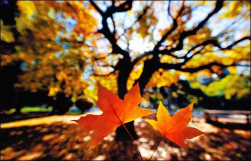 秋天的树叶榆树