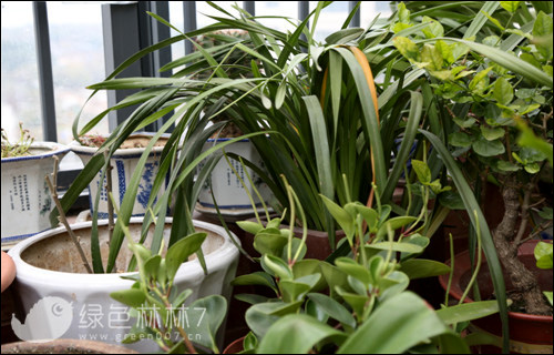 养花老人:人与植物之间的牵绊